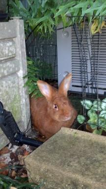 Louie playing hide-n-seek in the garden.