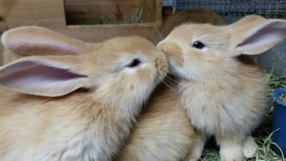 Nothing makes you happier than baby bunnies