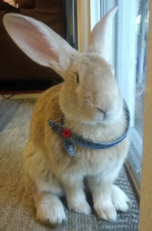 Huck won Rabbit of the Month with his stylish bandana