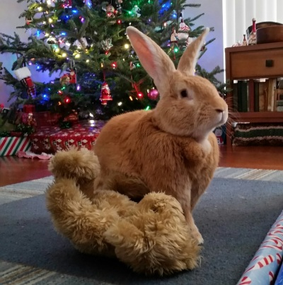 Monty Christmas 2
