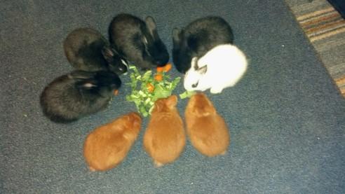 Mix-n-Match Bunnies