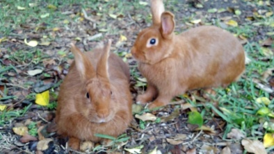Thrianta Rabbits does Sophie and Molly © 2013 Grimes Family Fluffers