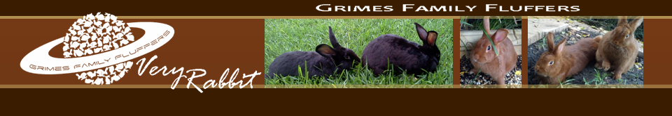 Very Rabbit © 2013 Grimes Family Fluffers