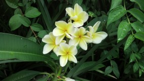 blooms of yellow and white
