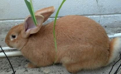 A new flower for our bunny garden