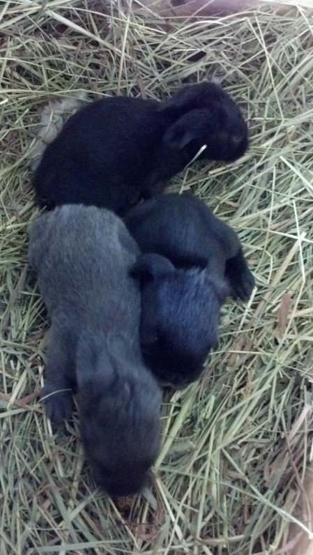 Two blacks and a sweet little blue
