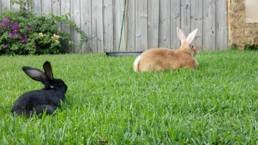 You've got to love a yard full of rabbits