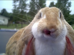Rabbits are just stupid cute !!